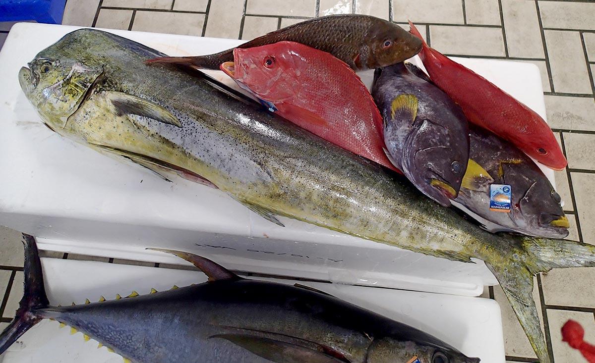 pêche avec la sardine