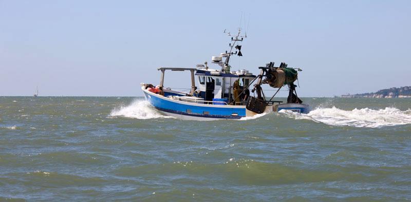 Vidéo la pêche sur le brochet volga